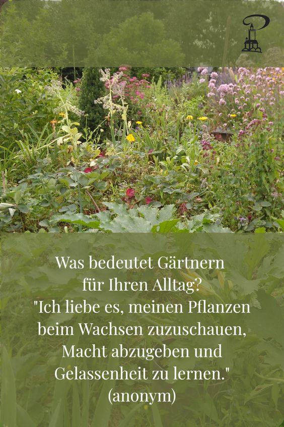 Pin #GartenEinsichten - Ich liebe es meinen Pflanzen beim Wachsen zuzusehen