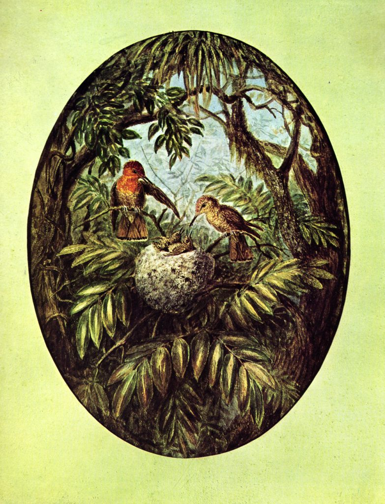 "Illustration Anton Görings aus dem Buch ""Venezuela"""