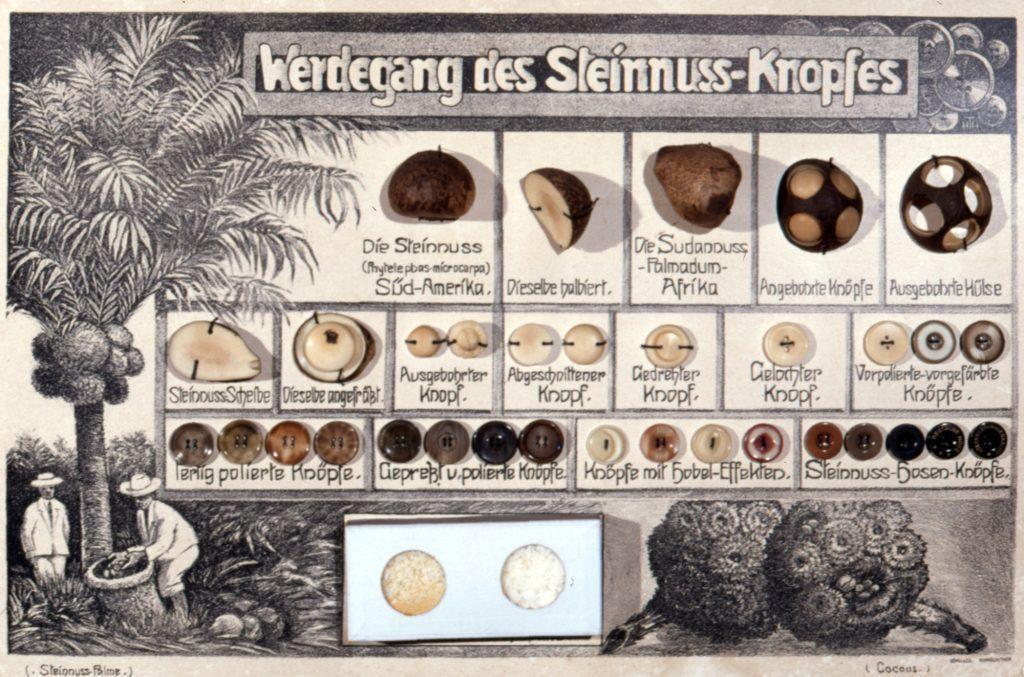 Herstellung eines Steinnuss-Knopfes (Sammlung Museum Burg Posterstein)