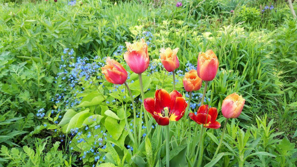 Beispielbild Gartenblumen rot, blau und grün