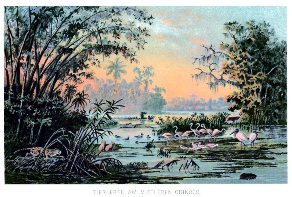 Tierleben am mittleren Orinoco, Chromolithografie nach Anton Goering, Sammlung Museum Burg Posterstein