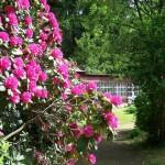 Der zu Schloss Tannefeld gehörige Park ist ein beliebtes Ausflugsziel, besonders wenn die Rhododendren blühen.