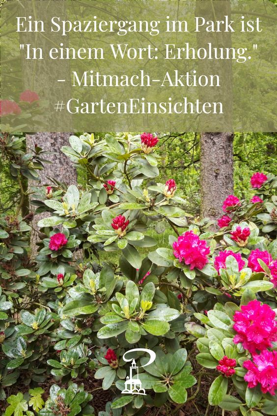 Rhododendren im Schlosspark Tannenfeld